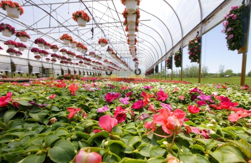 Download Berçário foto de stock. Imagem de venda, greenery, vidro - 10065476