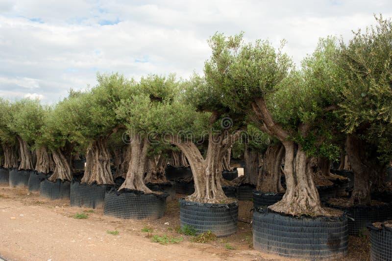 Berçário de árvore fotografia de stock