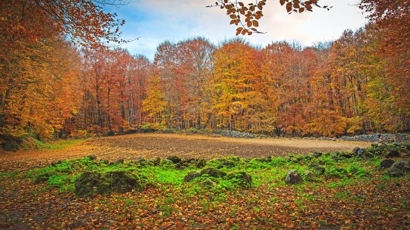 Berömd bokträdskog i Spanien, nära byn Olot, nära den omgivande laen Fageda för volcanoes arkivbild