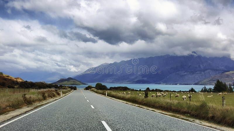 Berömd elasticitet av vägen i Nya Zeeland royaltyfri fotografi