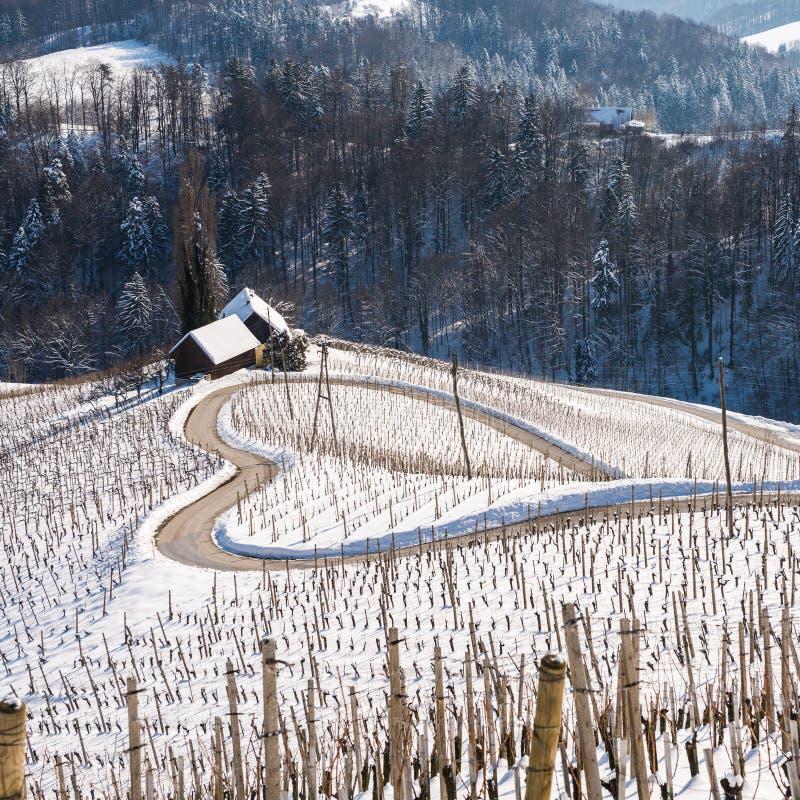 Berömd hjärta formade vinvägen i Slovenien i vinter, royaltyfria foton