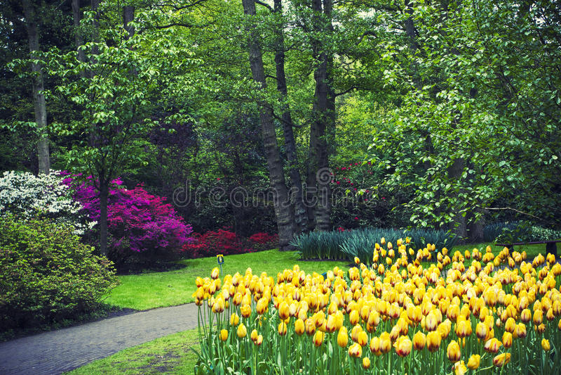 Berömd Keakenhof trädgård fotografering för bildbyråer
