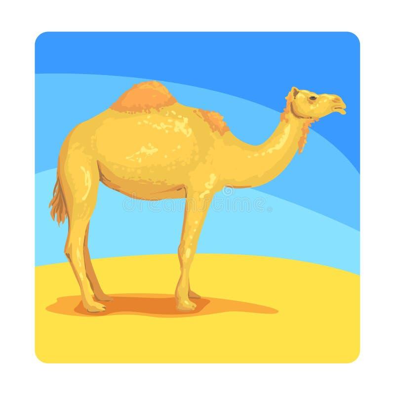 Berömd Touristic dragning för kamel av Förenade Arabemiraten Traditionellt turismsymbol av det arabiska landet vektor illustrationer