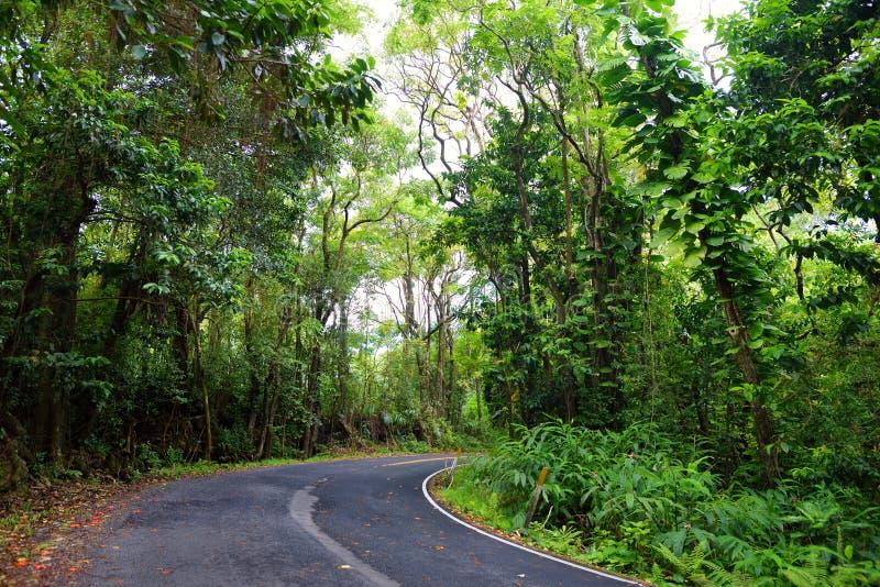 Berömd väg till Hana som är åtföljd med smala en-gränd broar, hårnålvänd och oerhörda ösikter, Maui, Hawaii royaltyfria bilder