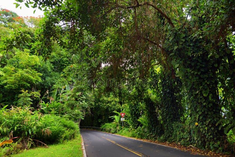 Berömd väg till Hana som är åtföljd med smala en-gränd broar, hårnålvänd och oerhörda ösikter, Maui, Hawaii arkivbild