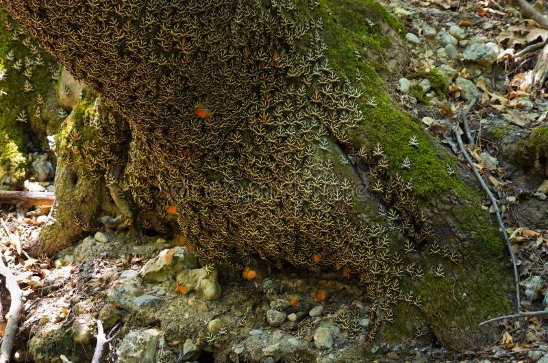 Berömda Butterfly Valley på Rhodes, Grekland royaltyfria bilder