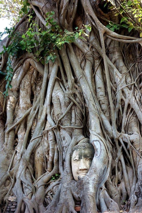Berömt Buddhahuvud för värld i Banyanträd royaltyfria bilder