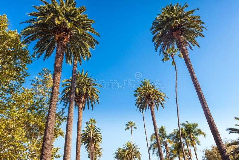 Berömt gömma i handflatan av Beverly Hills i Los Angeles arkivfoton