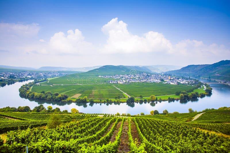 Berühmte Mosel-Krümmung mit Weinbergen nahe Trittenheim lizenzfreie stockfotos