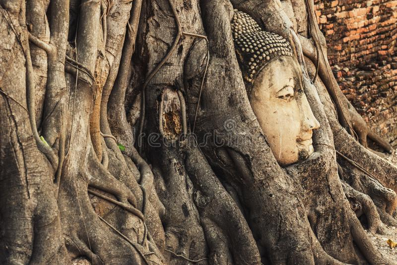 Berühmter Buddha-Kopf mit Banyanbaum-Wurzel am buddhistischen Tempel Wat lizenzfreie stockbilder