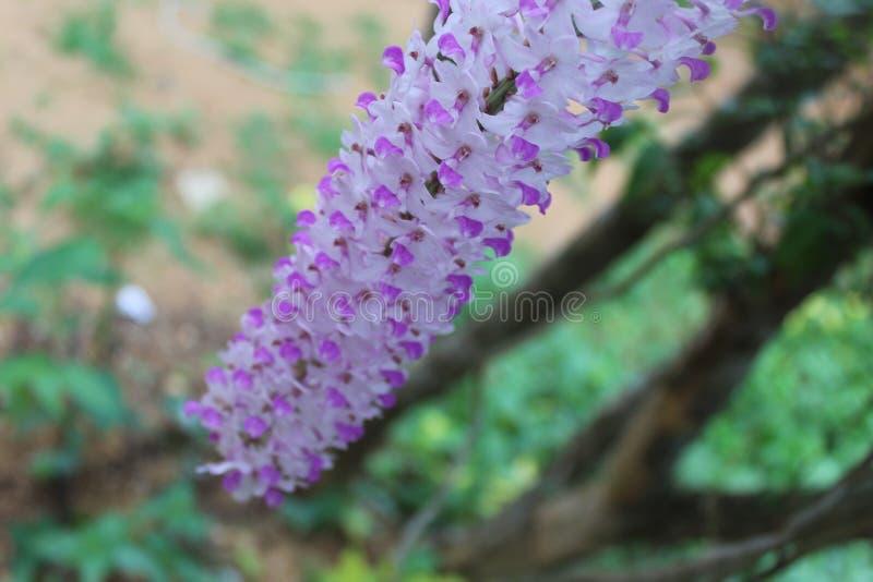 Ber orchidei kwiat w plamy tle zdjęcia stock