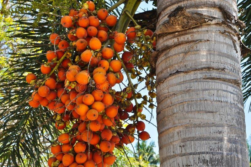 ber palma zdjęcie stock
