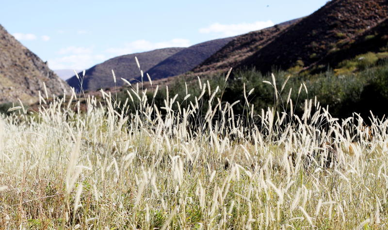 Ber trawy pole obrazy royalty free