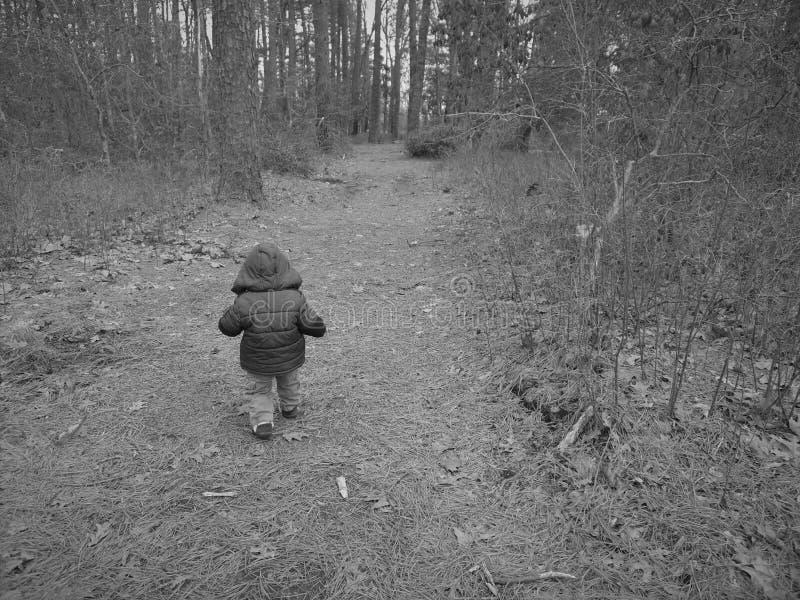 Berbeć chłopiec sztuki w drewnach fotografia stock