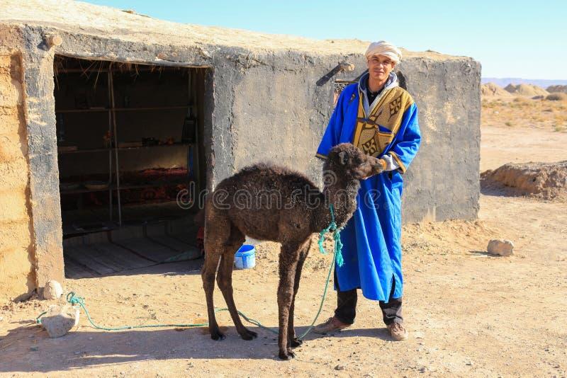 Berber mężczyzna z dziecko wielbłądzią łydką w saharze, Maroko, A obrazy royalty free