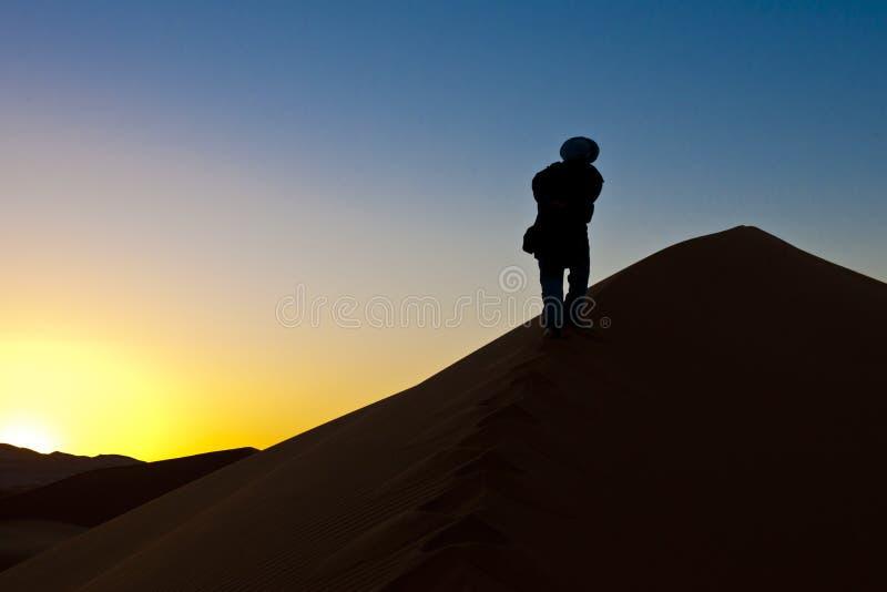 Berber man going up dunes at sunrise in Sahara, Morocco royalty free stock image