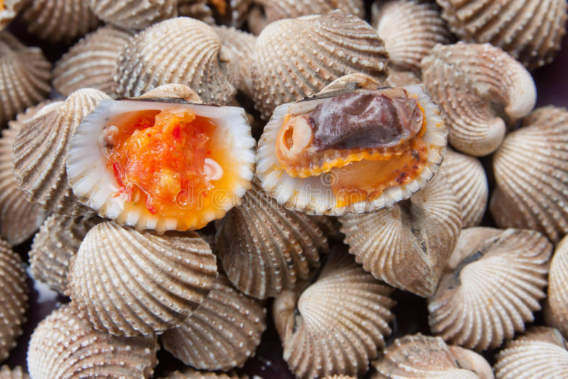 Berberecho o concha de peregrino de la sangre con la salsa de mariscos fotografía de archivo libre de regalías