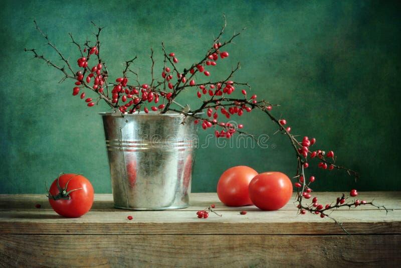 berberysowy życia wciąż pomidor zdjęcie stock