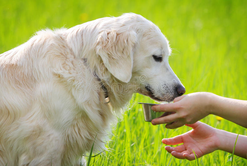 Bere del cane immagine stock libera da diritti