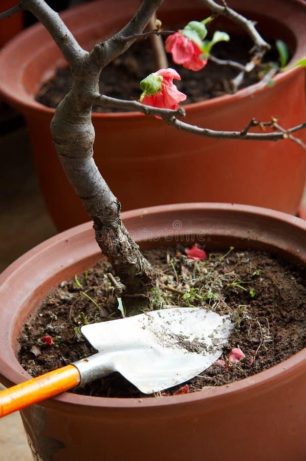 Bereiten Sie für die Gartenarbeit vor stockbilder