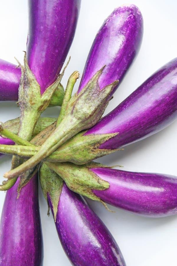 Berenjena púrpura fresca fotos de archivo libres de regalías