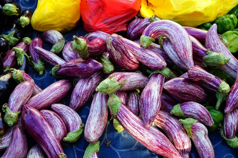 Berenjenas rayadas púrpuras imagen de archivo libre de regalías