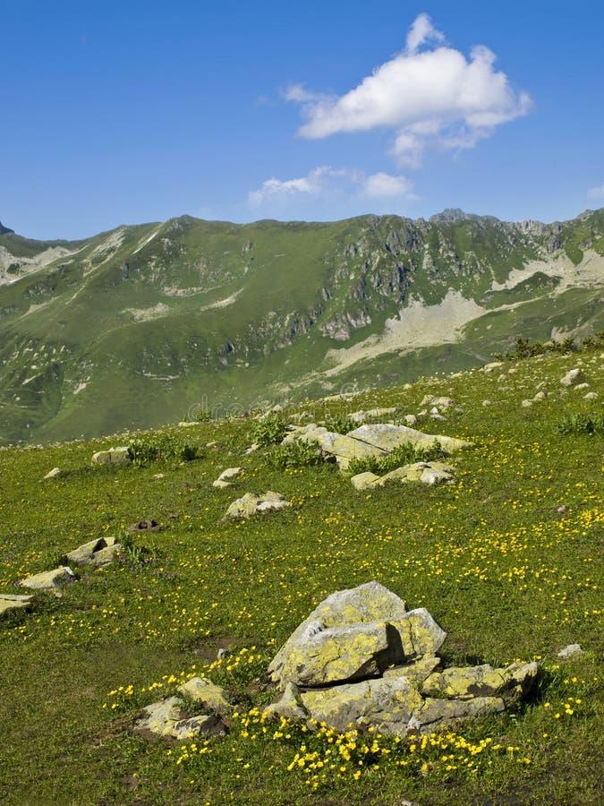 Bergängen som täckas med guling, blommar och stenar i vår arkivfoton