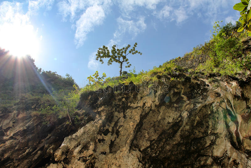 Download Berg stockbild. Bild von berge, fichten, gras, einzeln - 26364051