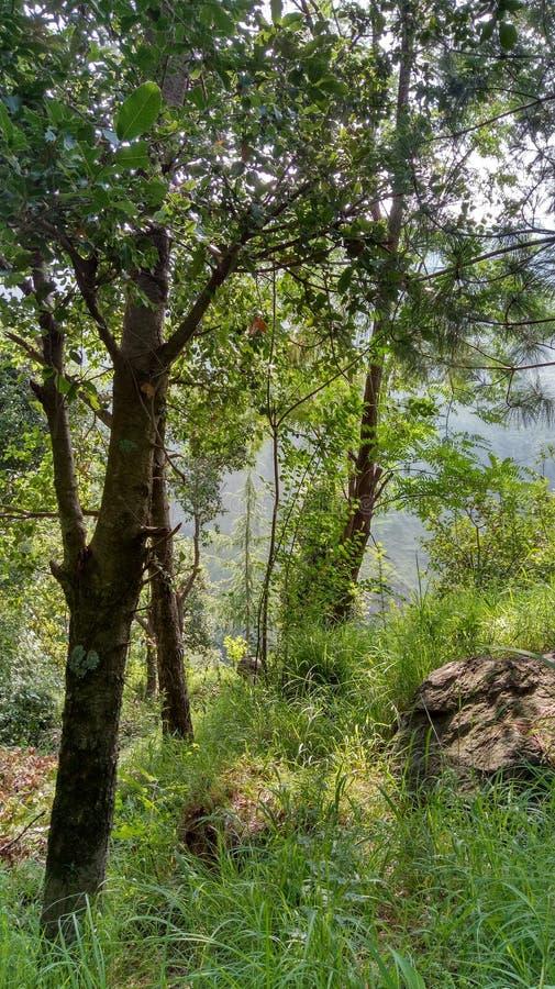Berg apple& x27; s landschapsmeningen royalty-vrije stock afbeelding