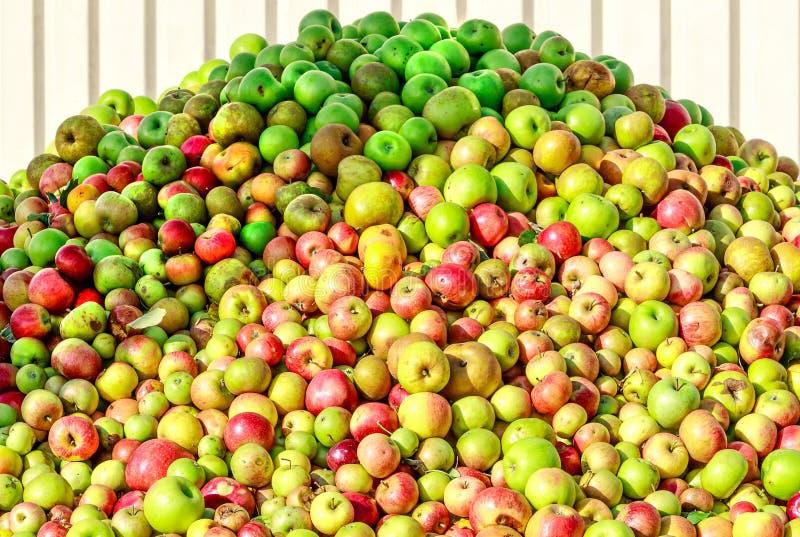 Berg av äpplen för framställning av äppeljuice och av äppelmust i Hessen, Tyskland royaltyfri bild
