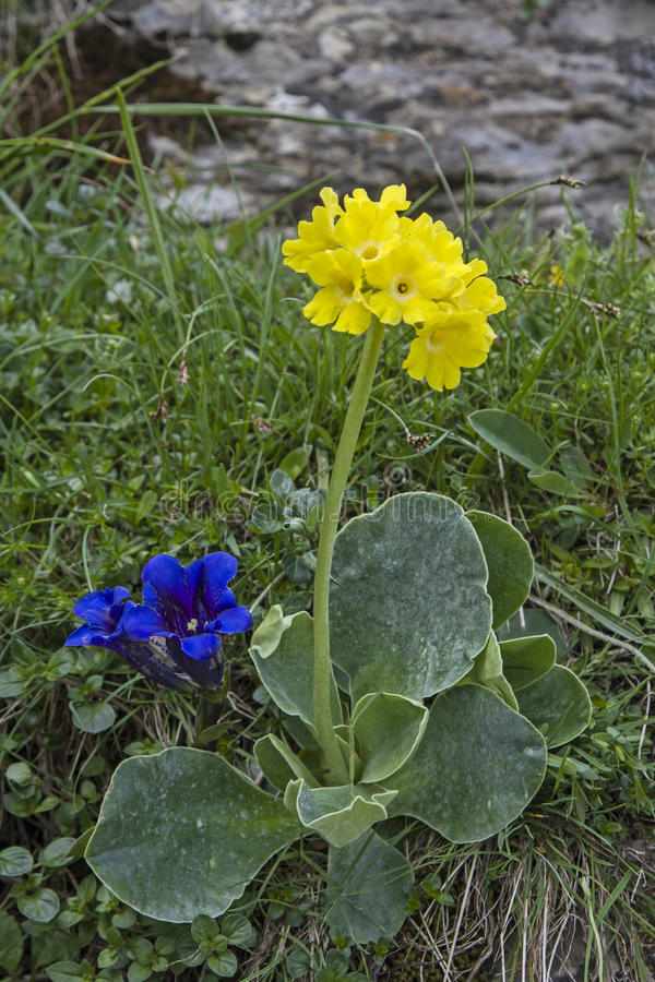 Berg blüht im Frühjahr lizenzfreies stockfoto