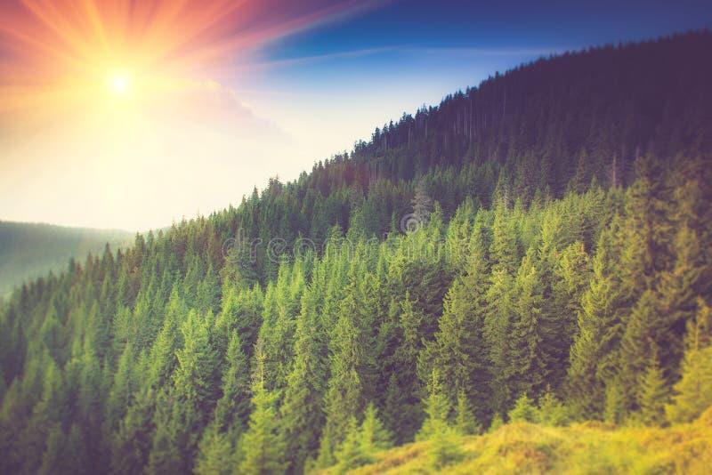 Berg boslandschap onder avondhemel met wolken stock foto's