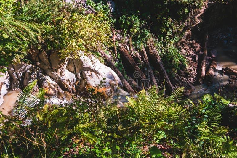 Berg bosstroom die onder groene varenbladeren en rotsen dalen royalty-vrije stock foto's