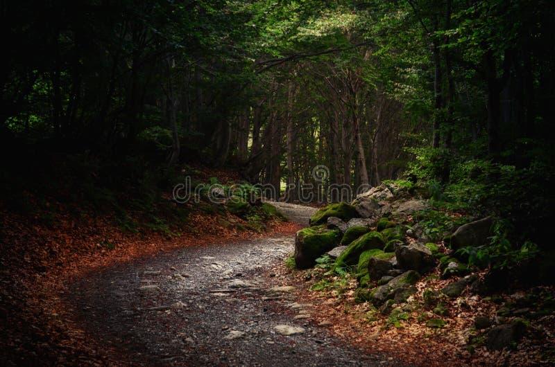 Berg bosweg stock foto