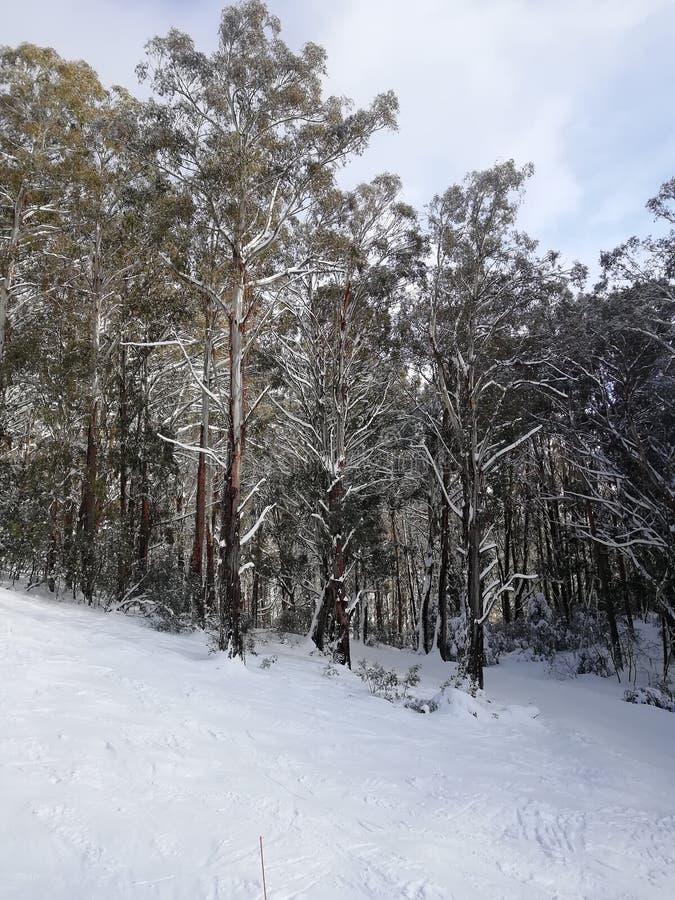 Berg Buller, Melbourne, Australien im Winter stockfotografie