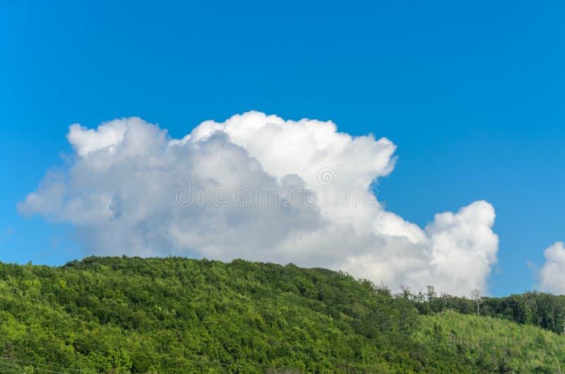 Berg Carpathians t?ckte med gr?na tr?d med moln i himlen royaltyfria foton