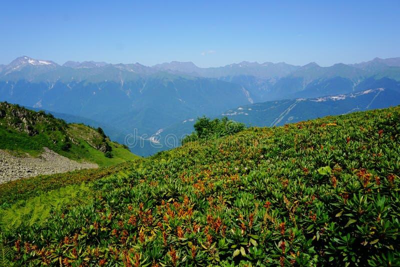Berg in den Blumen lizenzfreies stockfoto
