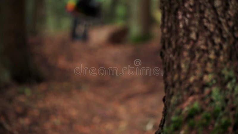 Berg, der in den Wald radfährt stock footage