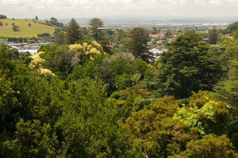 Berg Eden in Auckland stockbild