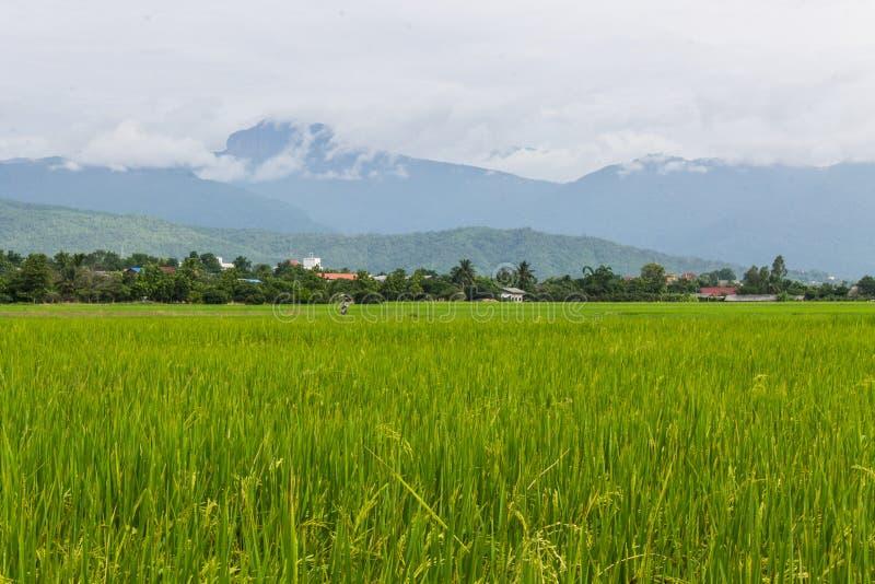 Berg en groen padieveld in Thailand stock fotografie