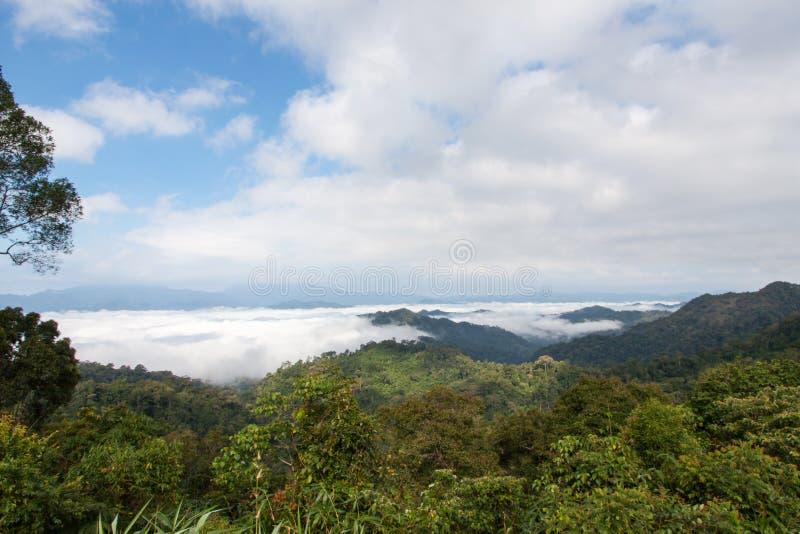 Berg en mist in tropisch stock fotografie
