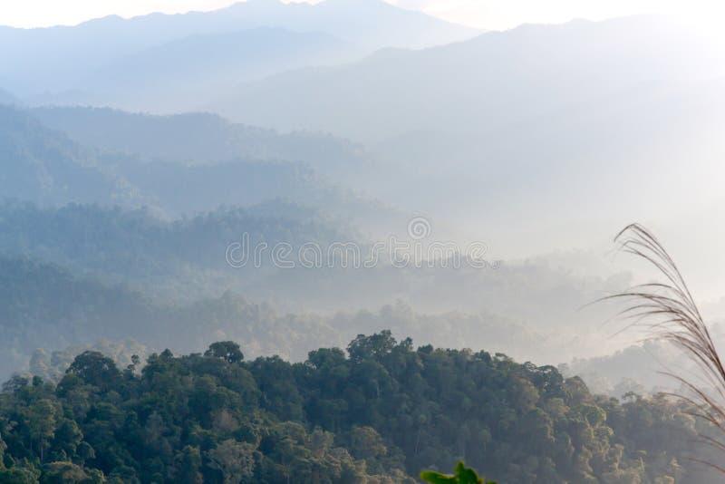Berg en mist in tropische 02 stock foto's