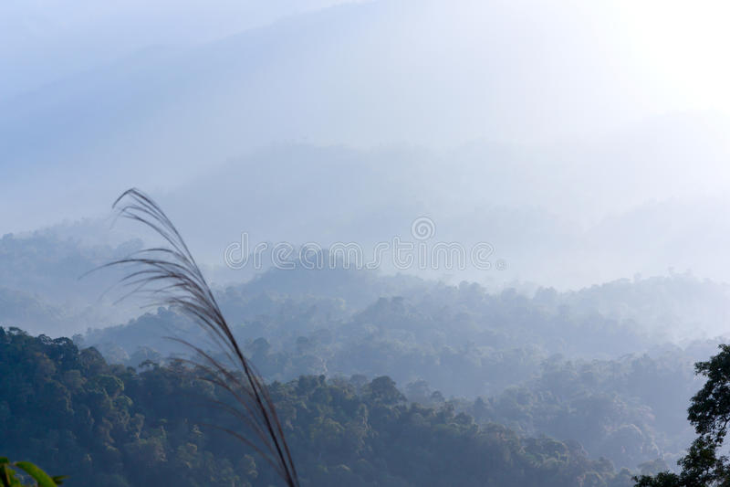 Berg en mist in tropische 01 royalty-vrije stock afbeelding