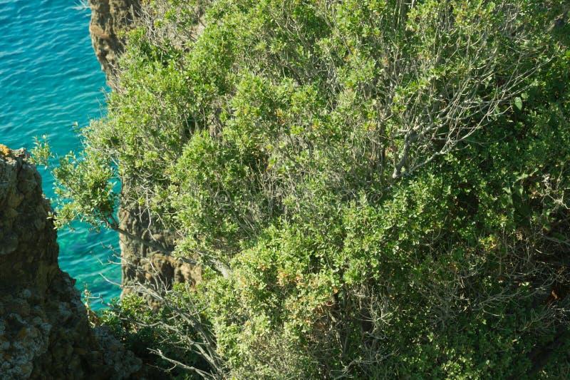 Berg en Overzees kustlijn met de bos en rotsachtergrond stock afbeeldingen