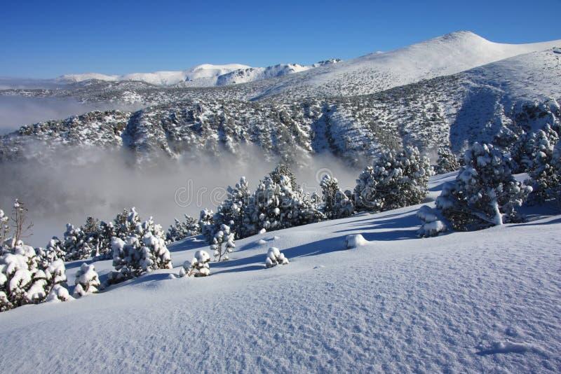 berg för liggande för borovetsbulgaria dimma royaltyfria foton