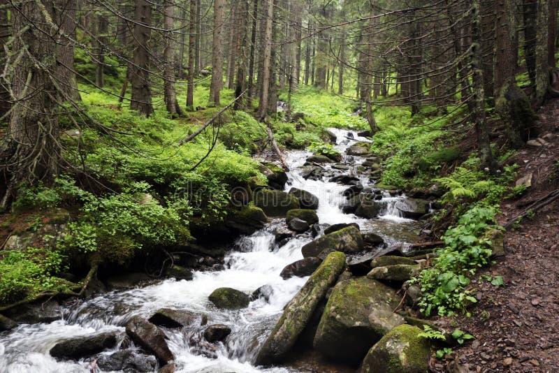 Berg Forest River royaltyfri fotografi