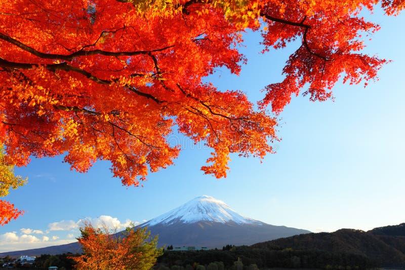 Berg Fuji en esdoornboom stock afbeeldingen