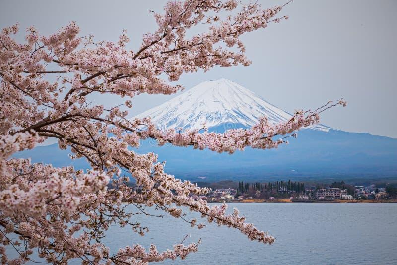 Berg Fuji i våren, körsbärsröd blomning Sakura royaltyfri bild