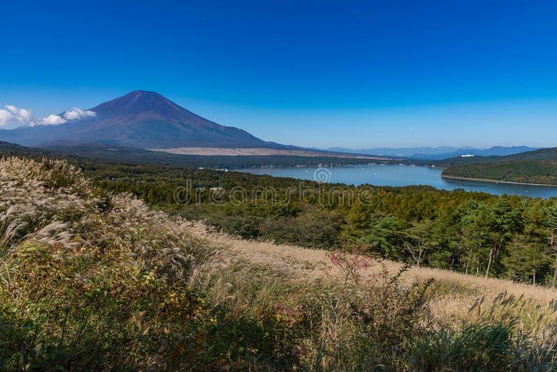 Berg Fuji utan snöräkning dess maximum från en synvinkel runt om Wanakako sjön i en morgon med brunt gräs i förgrund royaltyfria foton