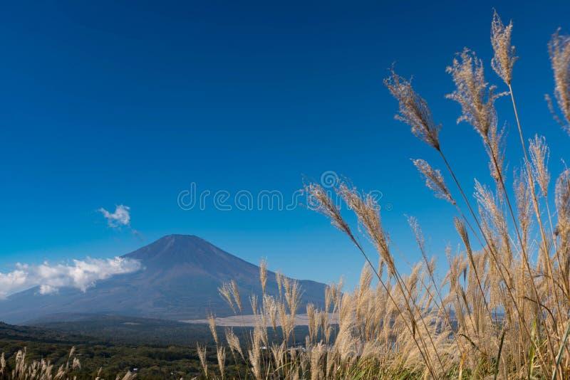 Berg Fuji utan snöräkning dess maximum från en synvinkel runt om Wanakako sjön i en morgon med brunt gräs i förgrund arkivbilder